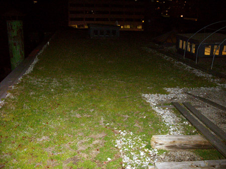 410 Richmond Green Roof