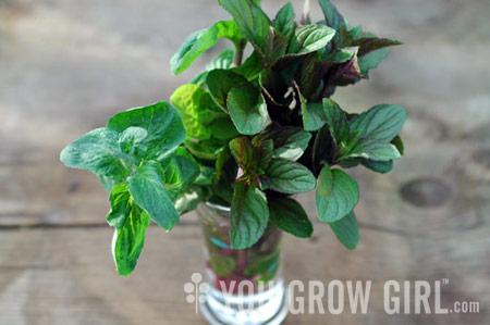 Cultivar más plantas con estacas de raíz | Bellas Jardinería